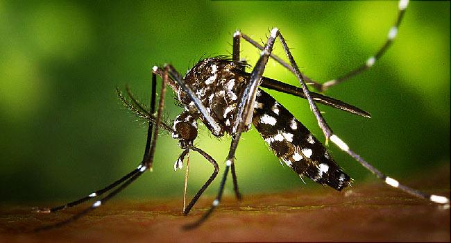 zika virus in italie